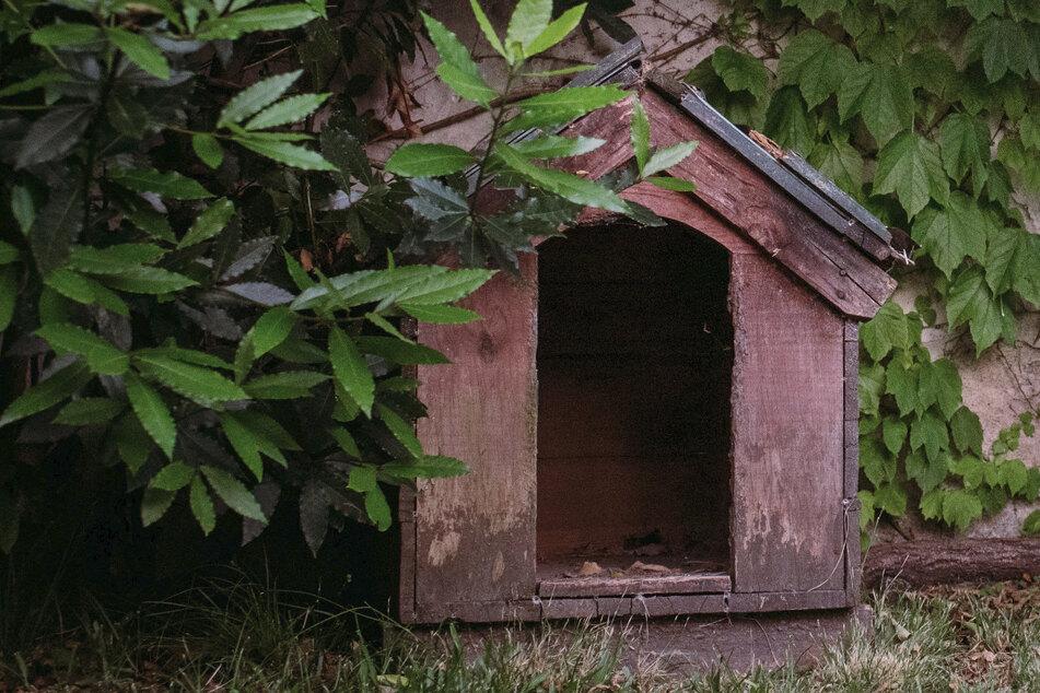 Deponierten Kriminelle 24.000 Euro in einer Hundehütte? (Symbolbild)