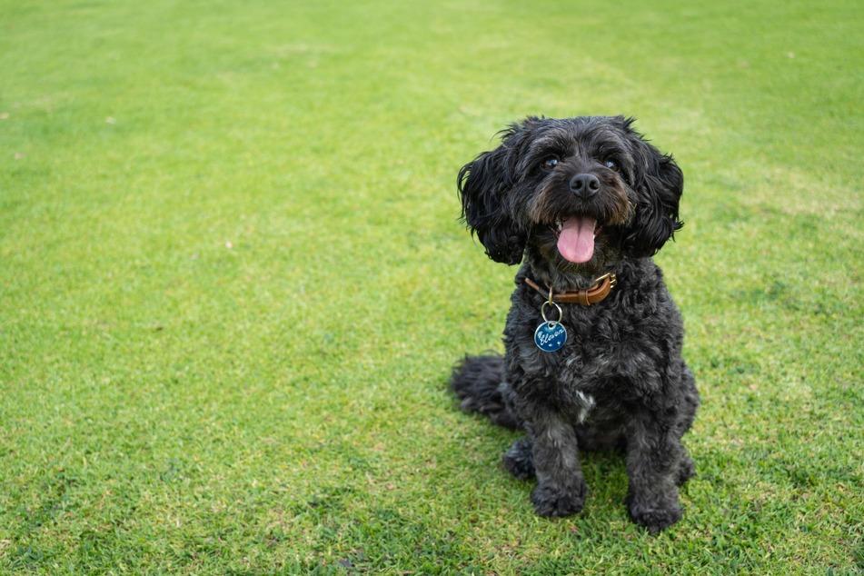 Hundehalter sollten mit ihrem Vierbeiner draußen spielen und sich Zeit nehmen. Das Gassigehen sollte nicht nur dem Lösen dienen.