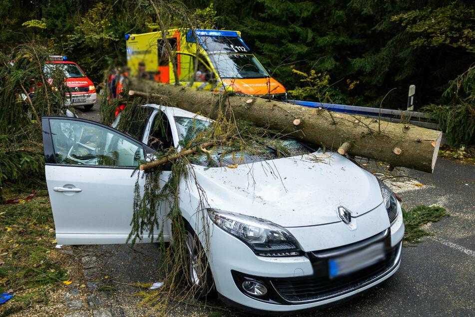 Sturmtief wütet in Chemnitz: Feuerwehr im Dauereinsatz, Schloßteichinsel gesperrt