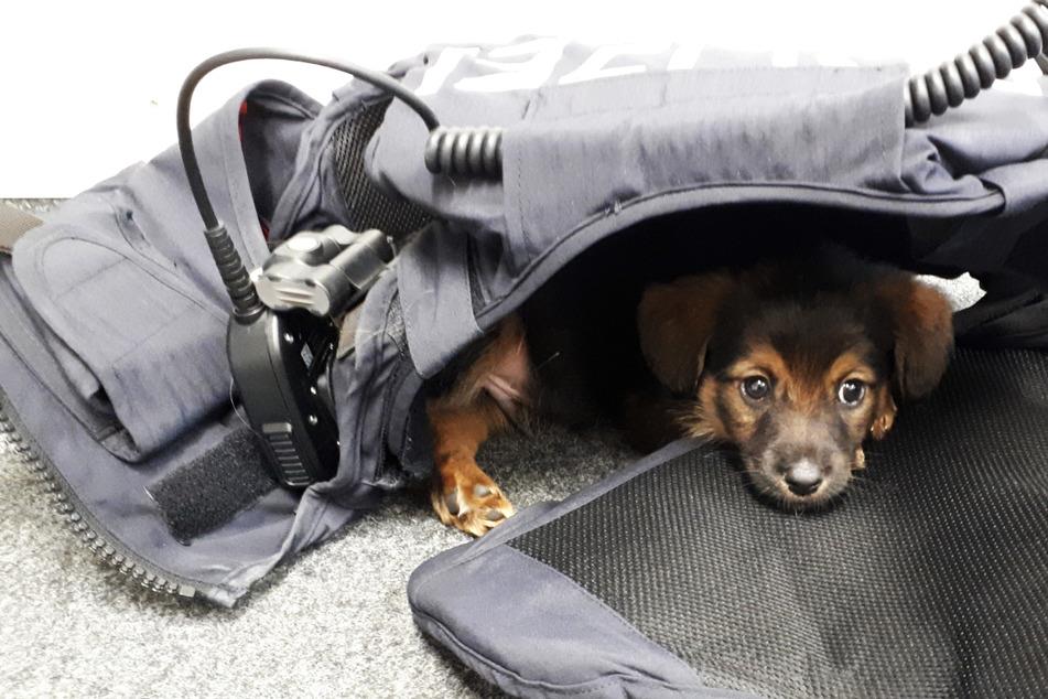 Polizei stoppt illegalen Welpenhandel mit krankem Hund!