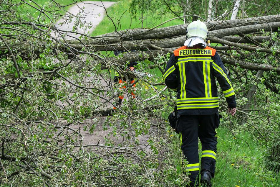 Erzgebirge: Sturmböen reißen mehrere Bäume um