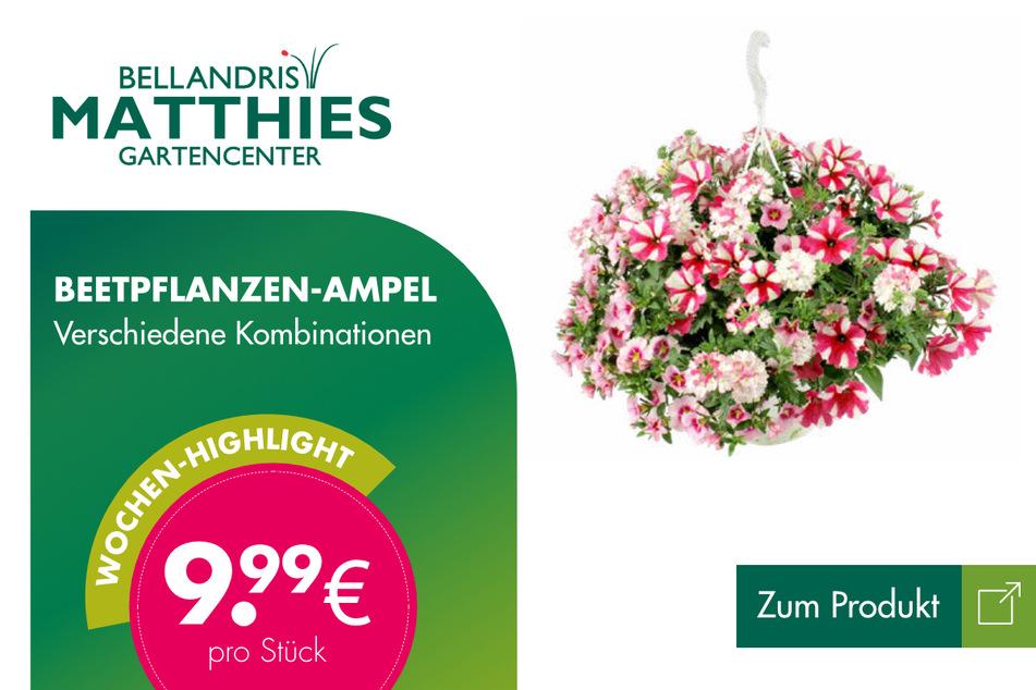 Beetpflanzen-Ampeln für je 9,99 Euro