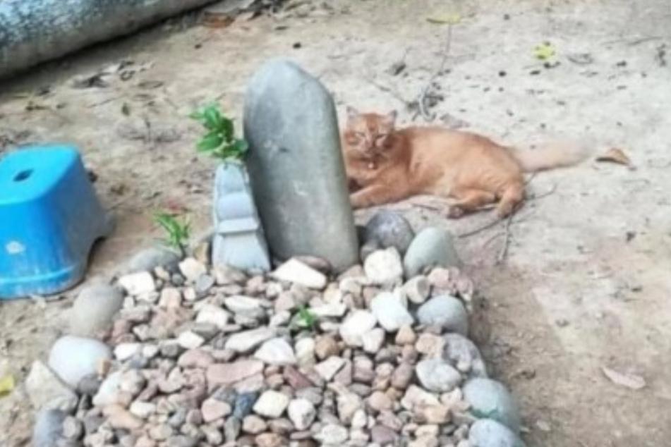 Nana at her owner's graveside.