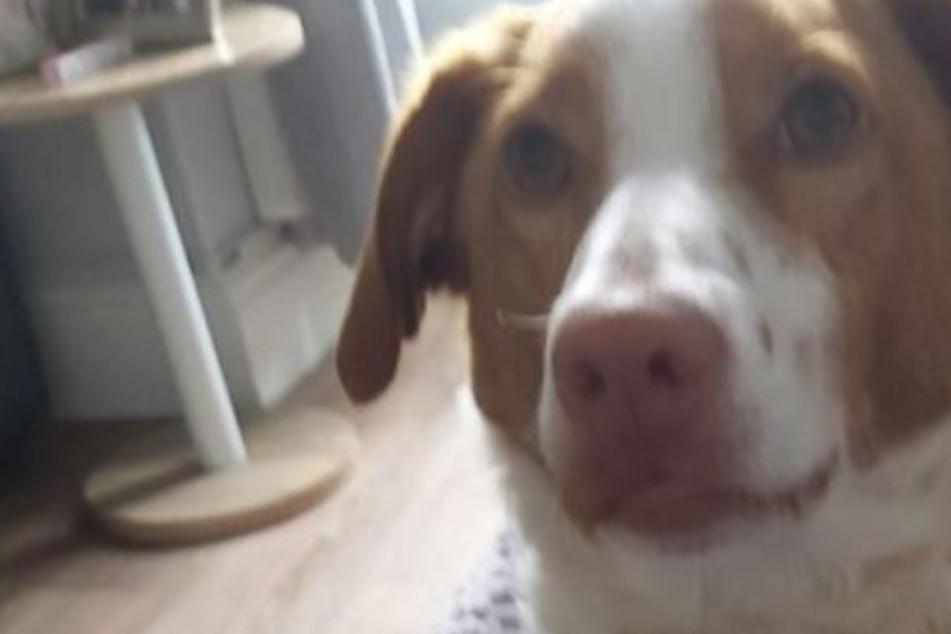 """""""Ich werde nie aufhören, meinen kleinen Hund schreien zu hören"""": Frau sieht ihren Vierbeiner grausam sterben"""