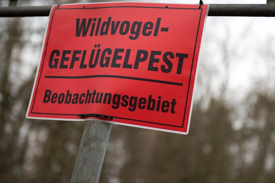 In Teilen von Chemnitz und Mittelsachsen gilt Stallpflicht für Geflügel und gehaltene Vögel.