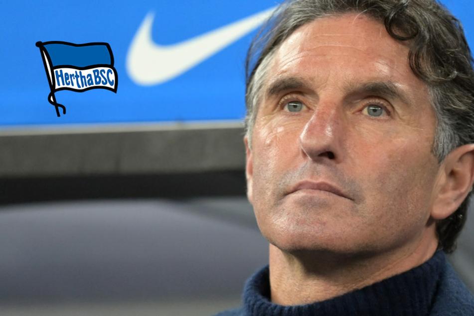 Hertha-Coach Bruno Labbadia sieht sein Team auf dem richtigen Weg