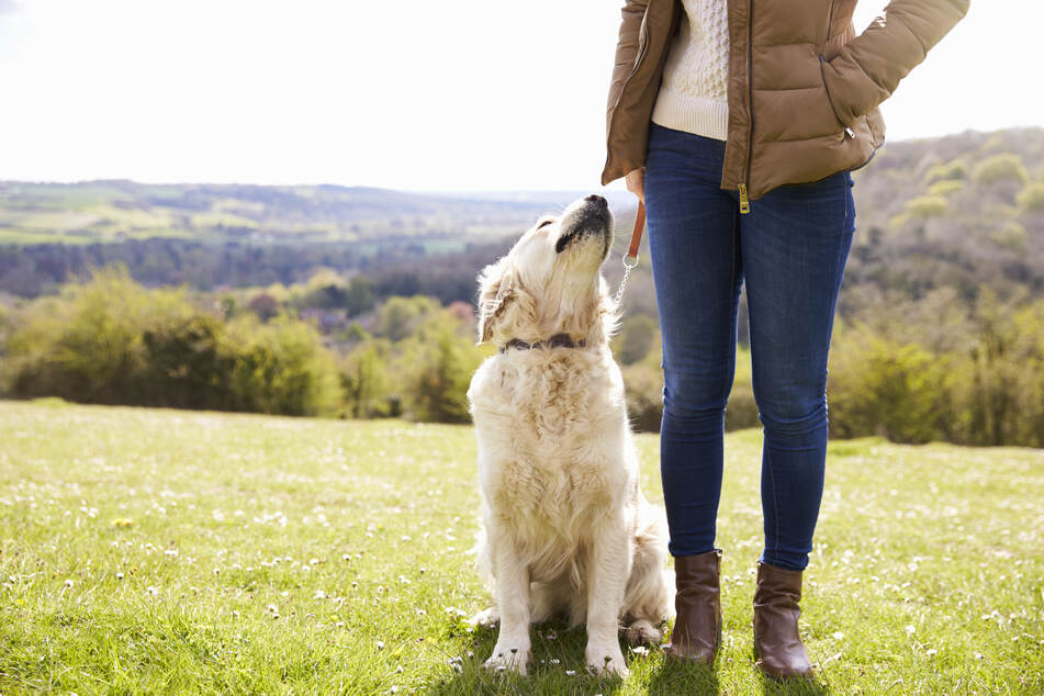 Frau (48) macht Oster-Gassirunde mit Hund, das endet aber alles andere als gesund