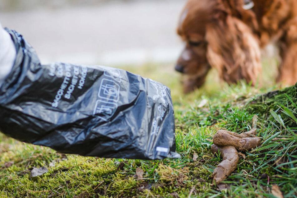 Weil ein Hundebesitzer in Berlin-Marzahn keine Lust hatte, den Haufen seines Vierbeiners zu beseitigen, ist es zu einer handfesten Auseinandersetzung mit einem Mitarbeiter des Ordnungsamtes gekommen. (Symbolfoto)