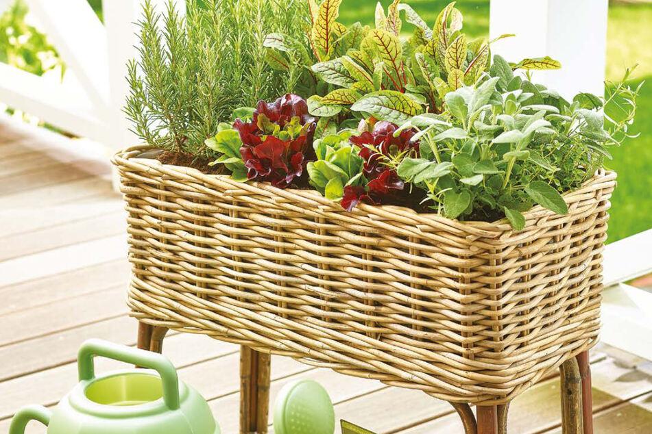Lust auf einen bunten Garten? Hier gibt's gerade alles, was Ihr dafür braucht!