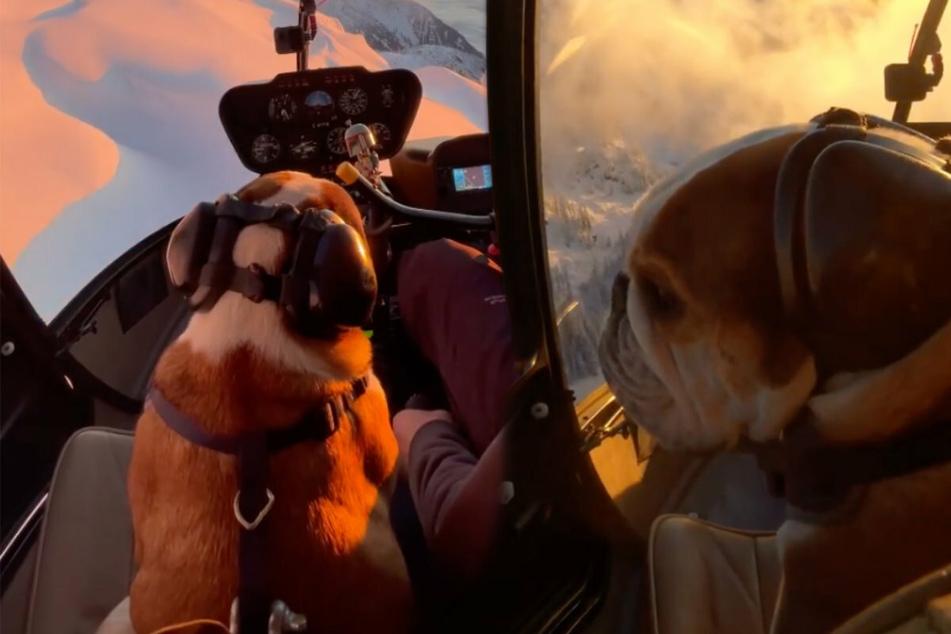 Mr. Bentley und sein Herrchen, Schauspieler Travis Fimmel, nehmen zahlreiche Flugstunden. Die Schnappschüsse faszinieren Menschen auf der gesamten Welt.