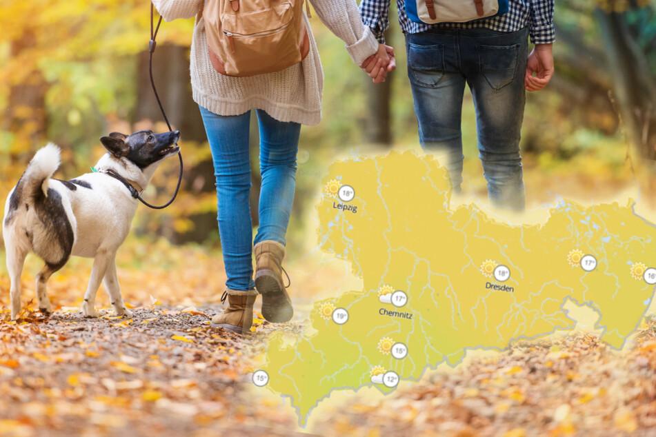 Ein Spaziergang im Wald ist ungefährlich: Das sollte man in der Woche gut nutzen.