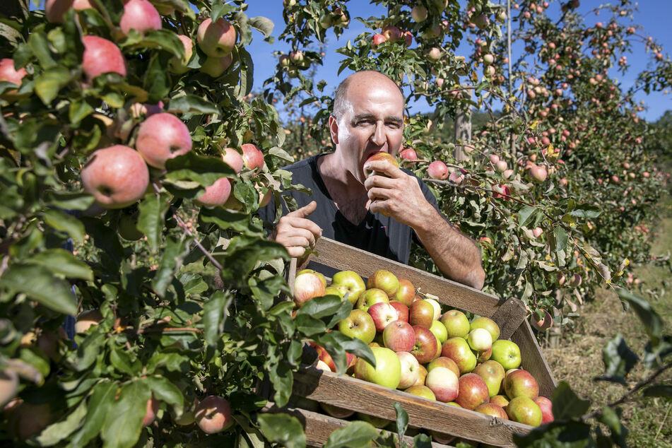 Obstbauer Robert Rüdiger (37) vermarktet Obst und Gemüse im Direktverkauf. Er hatte während der Krise mehr als doppelt so viele Kunden wie sonst.