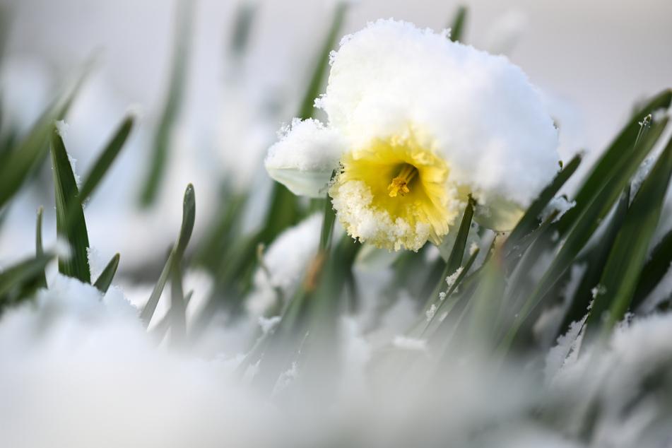 Brrr! Winterliche Aussichten: Schnee, Graupel und Glätte in NRW