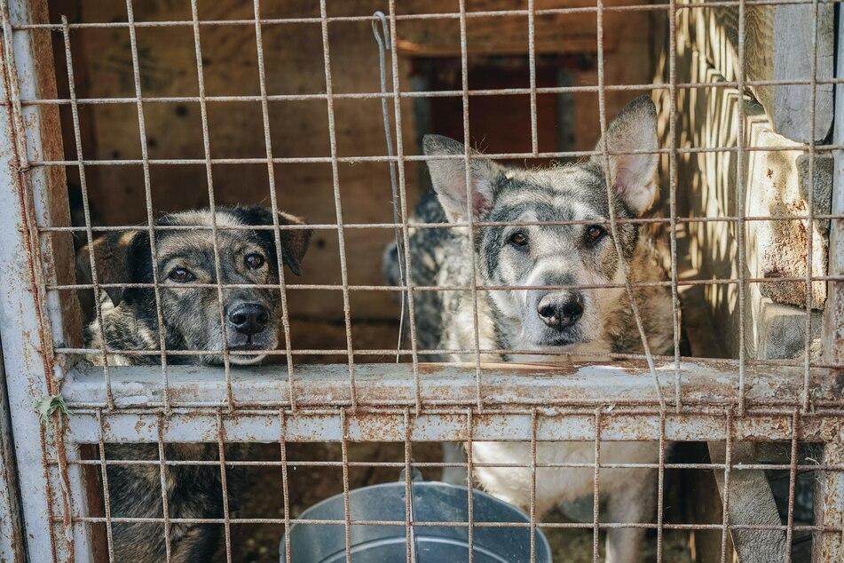 Hunde landen aus ganz unterschiedlichen Gründen im Tierheim und suchen ein neues Zuhause.