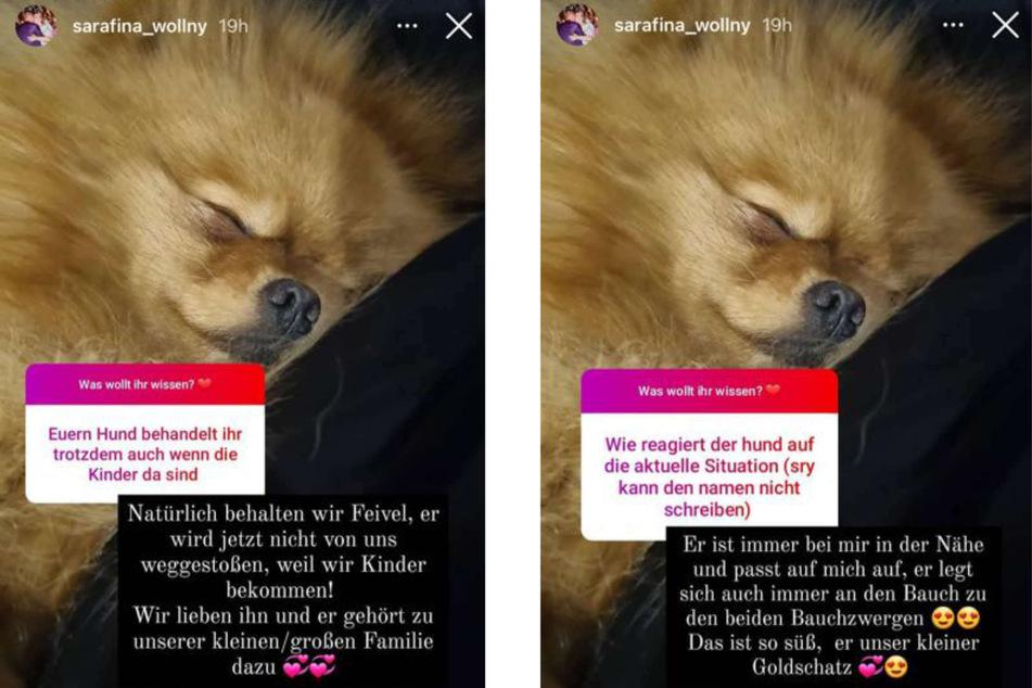 Sarafina Wollnys (26) Hund Feivel wird auch nach ihrer Schwangerschaft Teil der Familie sein, wie die baldige Mama in einer Instagram-Fragerunde klar machte.