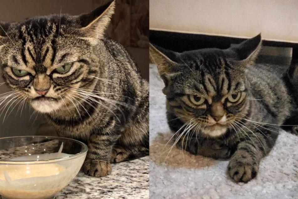 Grumpy Cat 2.0: Warum schaut diese Katze so böse drein?