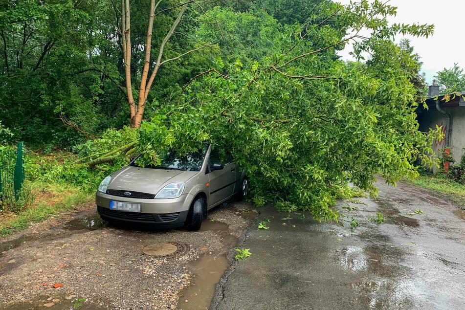 Auf dem Neuen Sülze Weg wurde dieses Auto von einem Baum begraben.