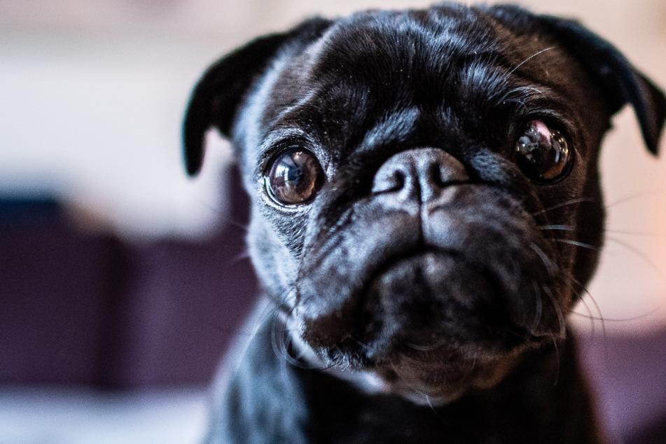 Kann ich trotz Corona noch mit meinem Hund schmusen?