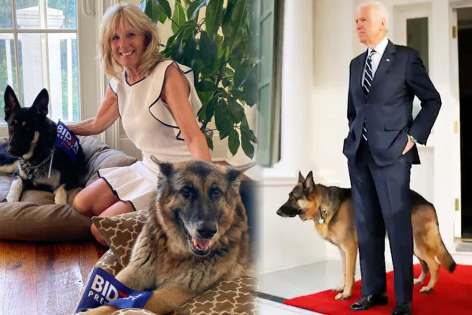 Will Joe Biden's dogs get their own inauguration ceremony?