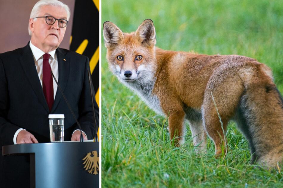 """""""Heimlicher Schlossherr"""": Bundespräsident Steinmeier sucht Namen für Fuchs"""