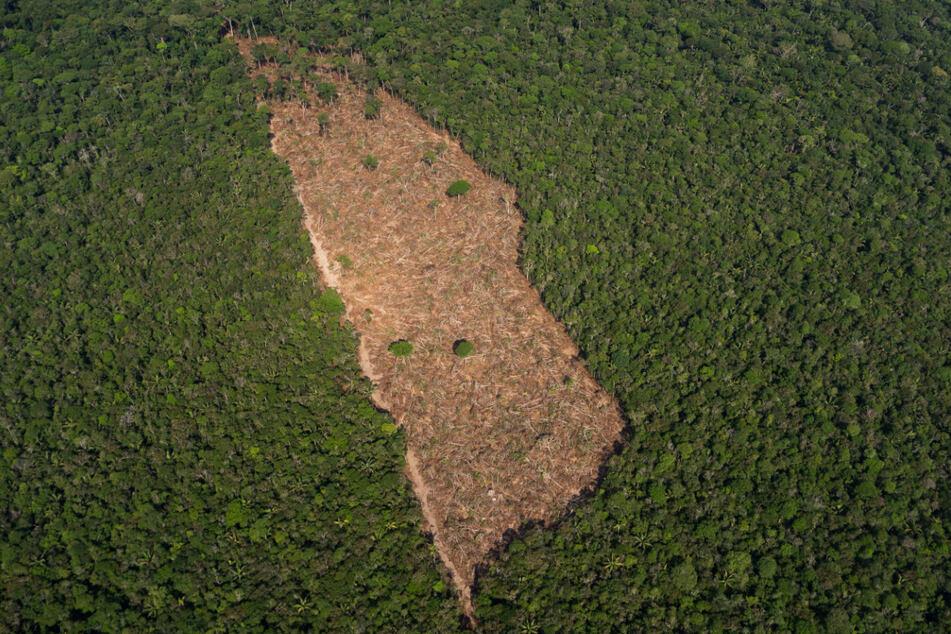 Blick auf ein abgeholztes Waldstück in der Mitte eines Waldgebietes im Amazonasgebiet.
