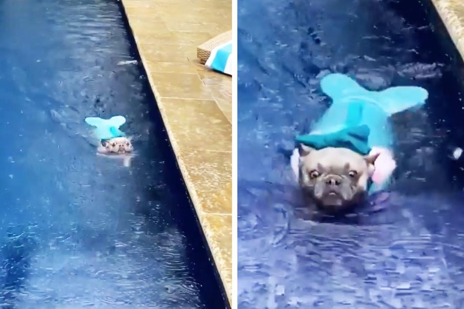 Niza goes for a swim dressed as a mermaid.