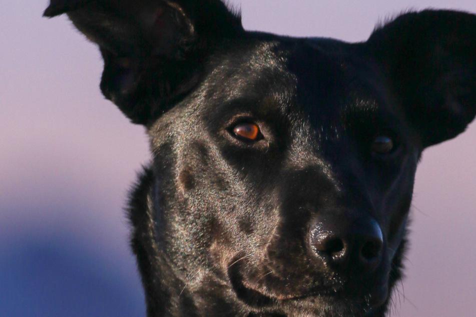 Hundekrankheit? Darum hat Dein Hund stumpfes Fell