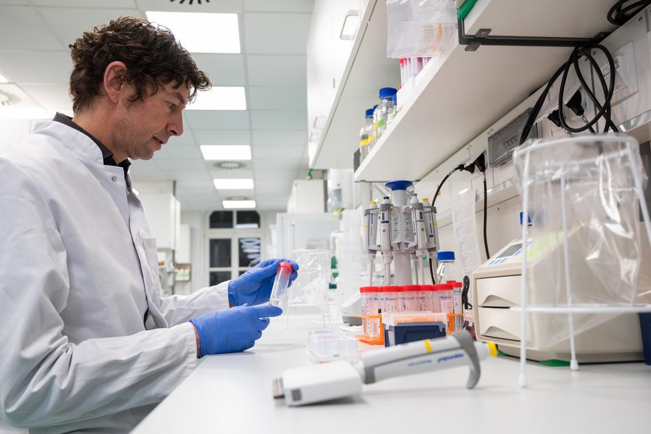 Drosten sieht sich Proben bei den Untersuchungen zum Coronavirus an.