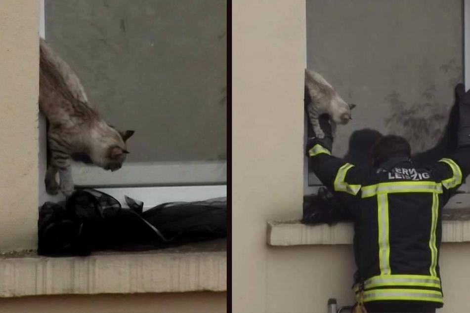 Leipzig: Dramatischer Rettungseinsatz in Leipzig: Feuerwehr befreit eingeklemmte Katze aus Kippfenster