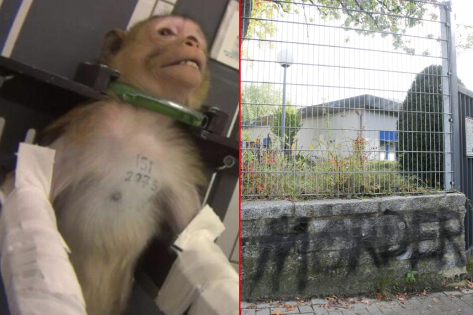 Nach Skandal darf umstrittenes Tierversuchslabor LPT nun doch weitermachen