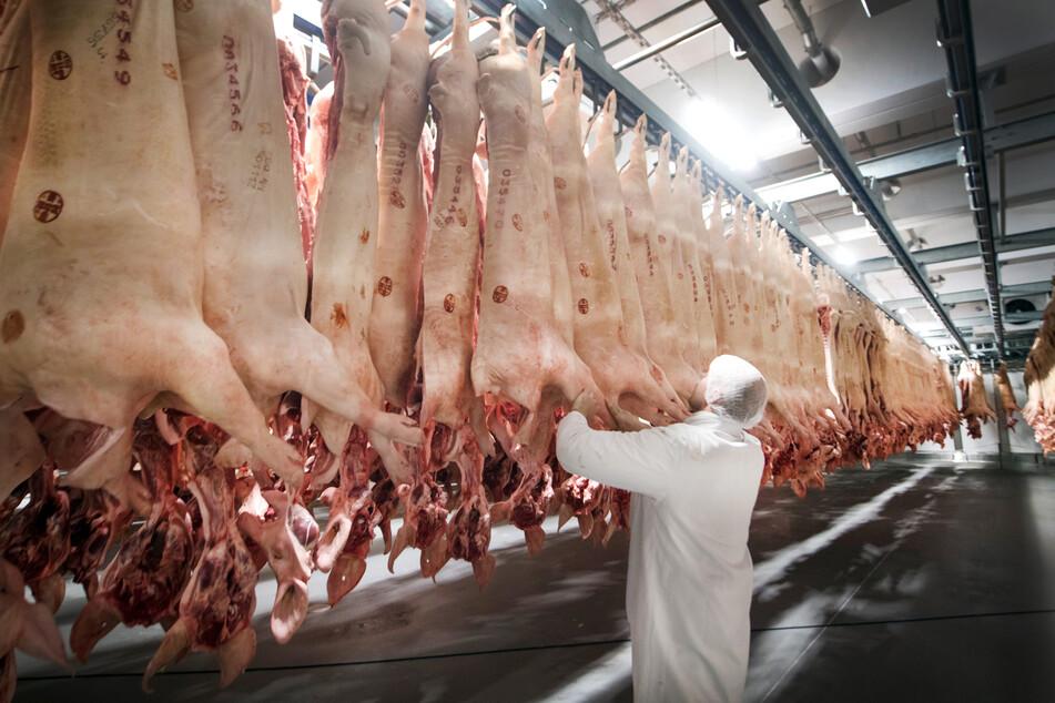 Frisch geschlachtete Schweine hängen in einem Kühlhaus des Fleischunternehmens Tönnies. Das Unternehmen sorgte mit besonders vielen Infizierten für Negativschlagzeilen.