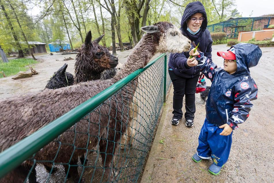 Paul Vieweg (4) und Mutter Kathrin Vieweg (42) trotzen dem Wetter und füttern bei ihrem Besuch im Amerika Tierpark Limbach-Oberfrohna zuerst die Alpakas.