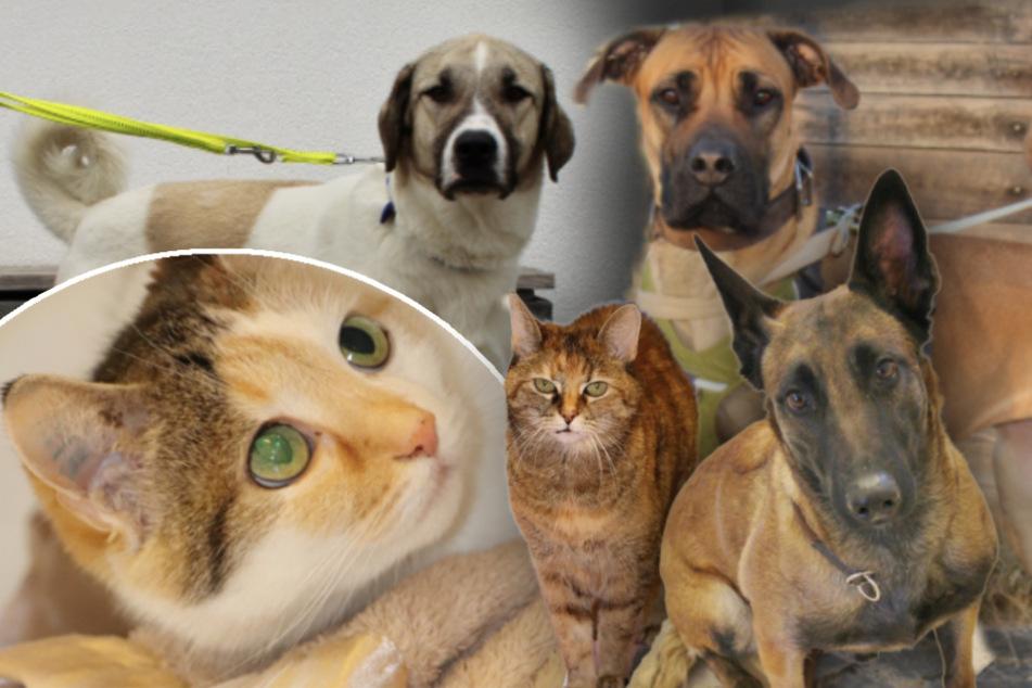 5 besondere Tiere: Diese Hunde und Katzen suchen ein Zuhause