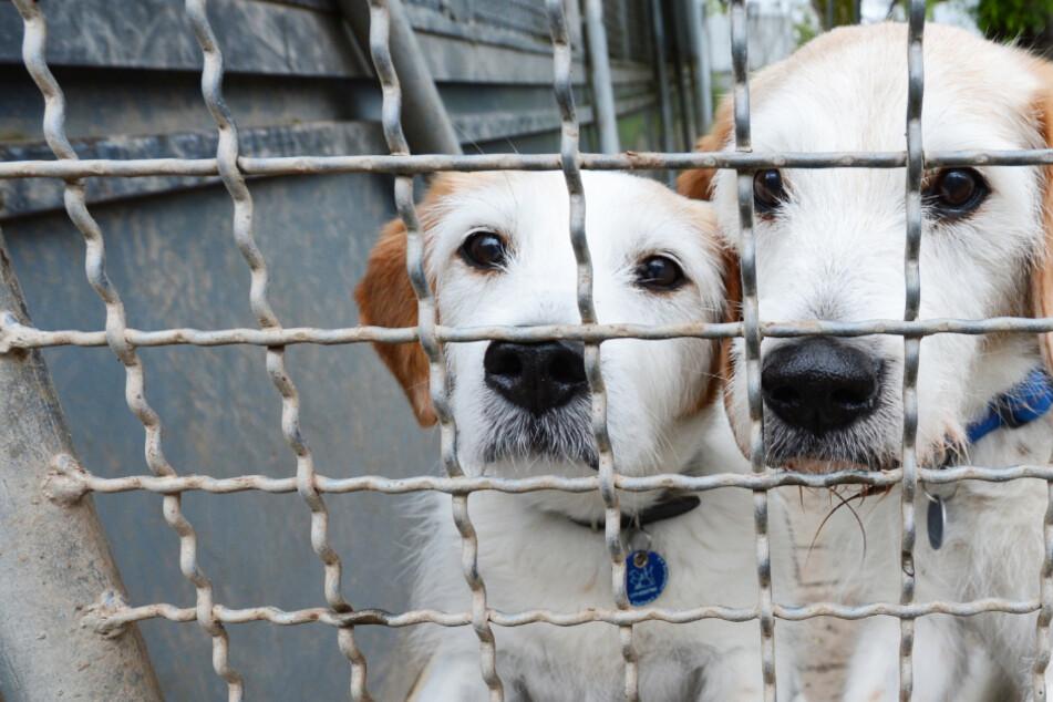 Gestohlene Haustiere: So viele Hunde und Katzen wurden in Hessen zur Beute von Dieben