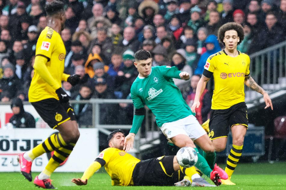 Milot Rashica (Zweiter von rechts) wird von gleich drei Dortmundern bearbeitet: Emre Can grätscht in ihn rein, Axel Witsel (r.) und Dan-Axel Zagadou (l.) sind bereit, einzugreifen.