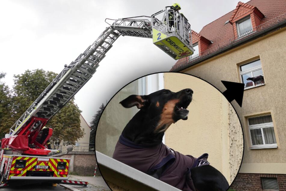 Dramatische Rettungsaktion: Hund sitzt auf Fensterbrett fest!