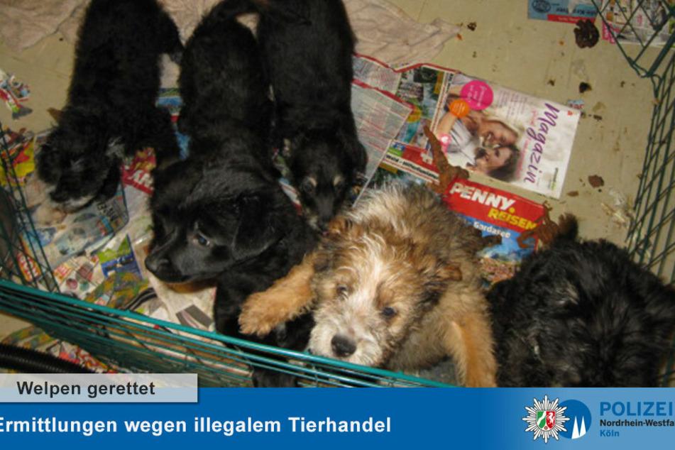 Weitere beschlagnahmte Hunde-Welpen.