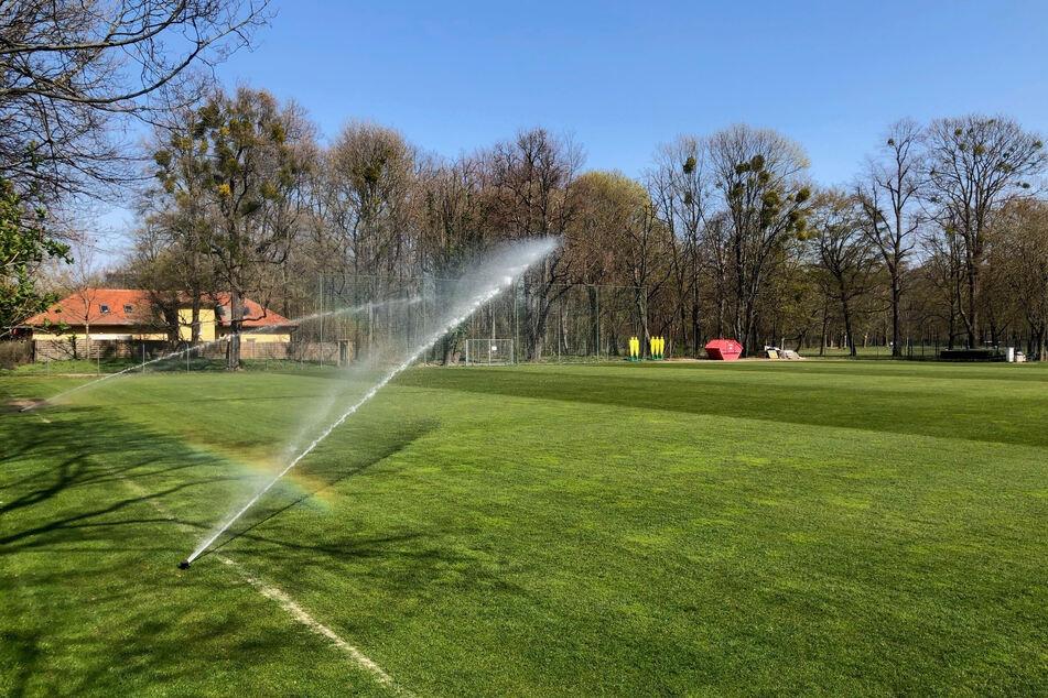 Im Großen Garten bewegt sich seit Montag nur die Sprinkleranlage. Von den Dresdner Spielern war noch nichts zu sehen.