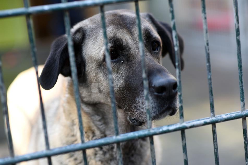 90 Hunde konnten nach Angaben der Polizei gerettet werden. (Symbolbild)