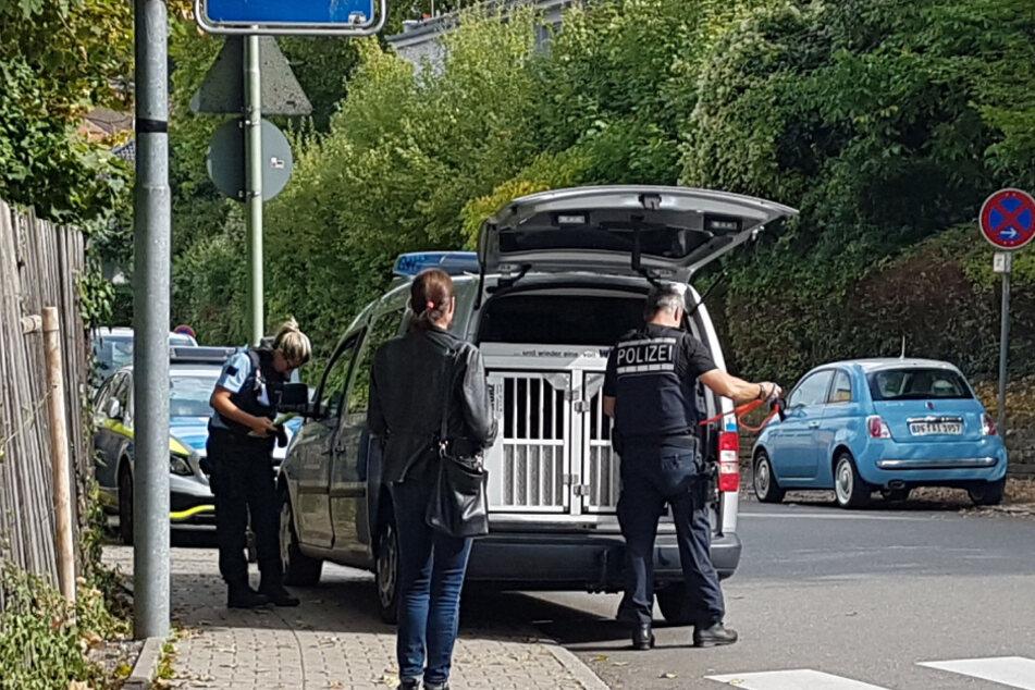 Polizisten setzen Sprengstoffhunde ein.