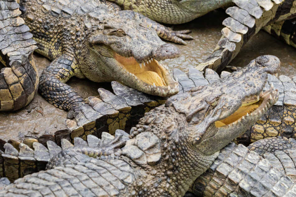 Florida woman crashes her car into an alligator-infested canal