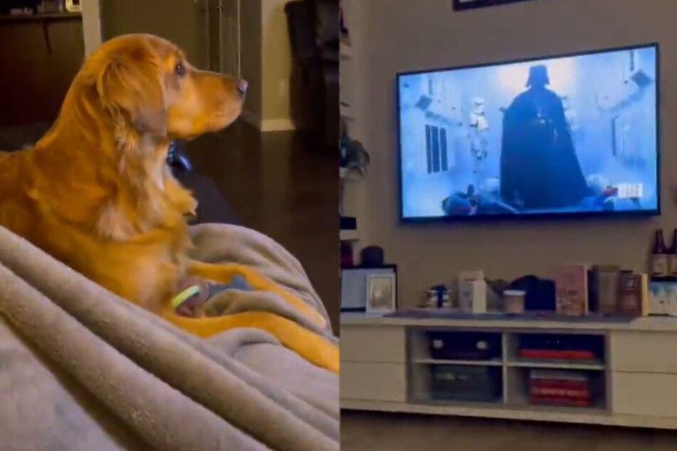 Even Luke Skywalker loves how much this dog hates Vader