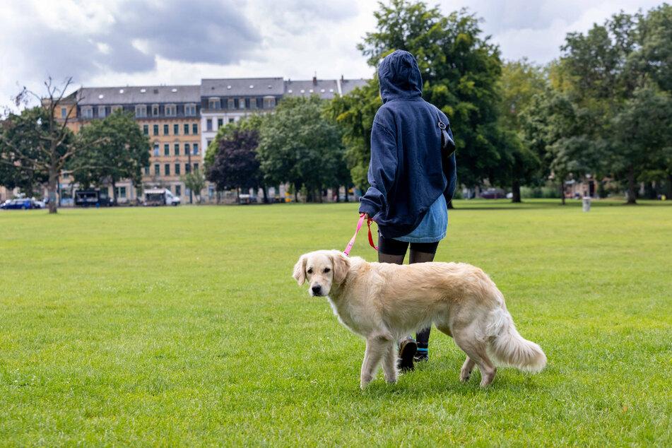 Der Golden Retriever Cora genießt die Zeit im Alaunpark. Immer wieder wird hier über spezielle Bereiche nur für Hunde diskutiert.