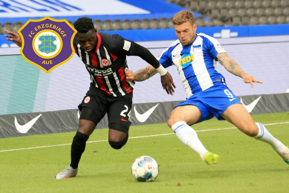Alexander Esswein: Ein Kandidat für den FC Erzgebirge Aue?