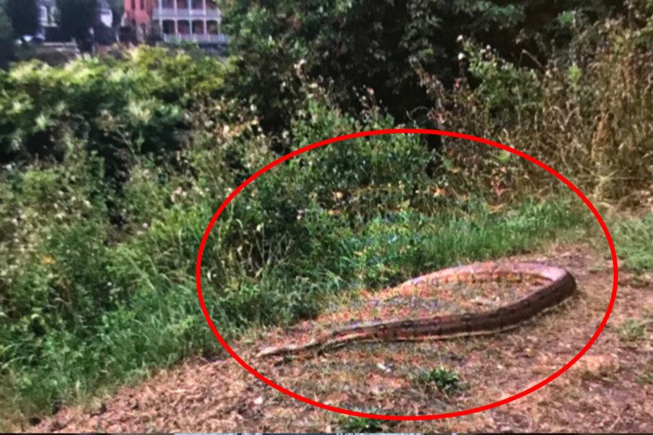 Mit dieser riesigen Schlange konnte in London wirklich niemand rechnen.