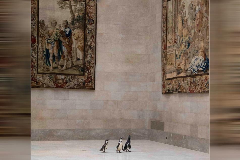Die entzückenden Pinguine wanderten frei durch die Museumshallen, als sie alten Meisterwerke bewunderten.