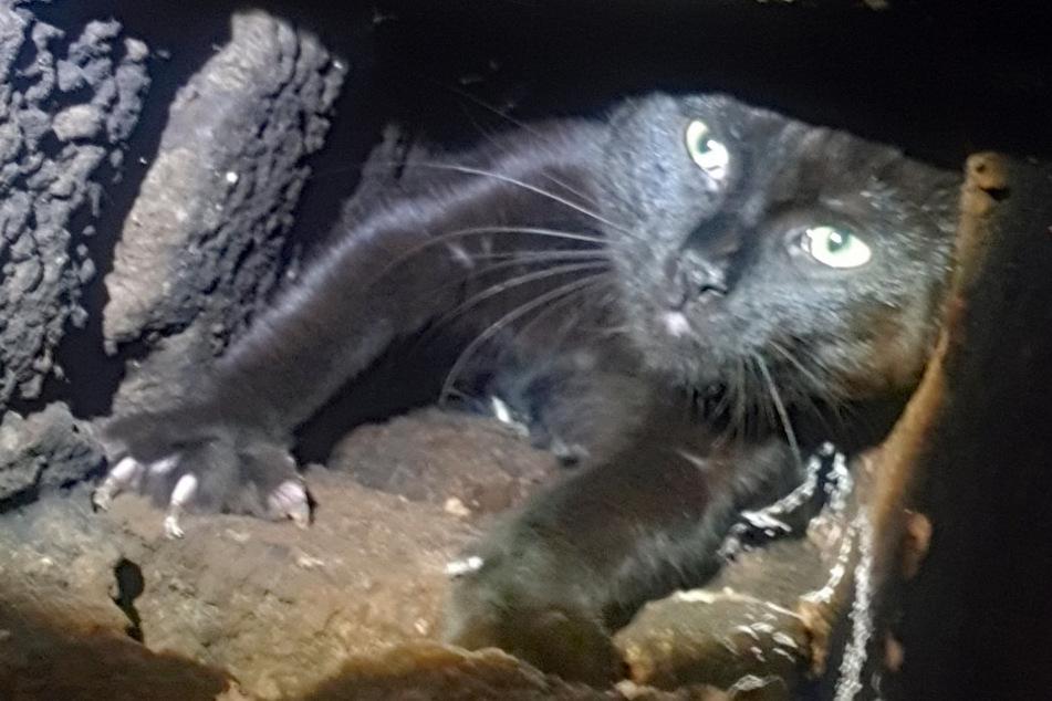 Feuerwehr will jammernde Katze retten, doch die flüchtet in Schornstein und wehrt sich