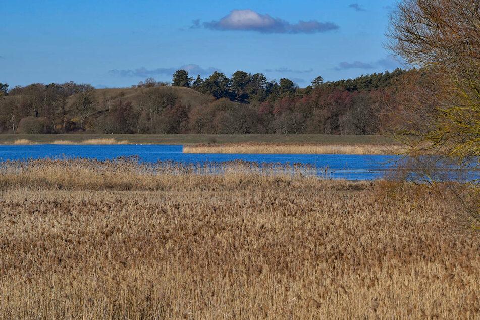 Ein Überschwemmtes Poldergebiet an der Oder im Nationalpark Unteres Odertal. Brandenburg hat acht Projekte im Rahmen des nationalen Hochwasserschutzprogrammes angemeldet.