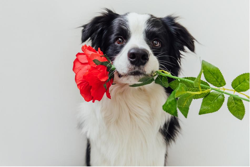 """Date mit Hund? Über die App """"Tinder"""" sollen sich nun Heimtiere und potenzielle Besitzer kennenlernen. (Symbolbild)"""