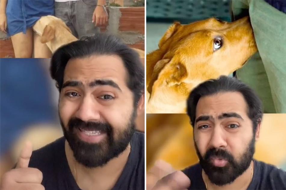 Arzt erklärt, warum Hunde bei Menschen an den Genitalien riechen